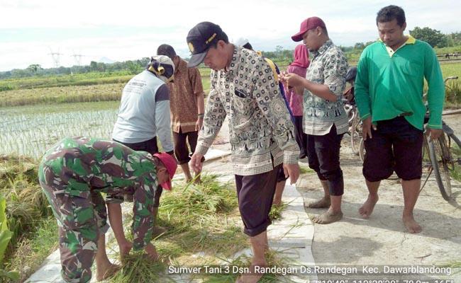 Bersama PPL, Babinsa Koramil 0815/08 Dawarblandong Dampingi Pengubinan