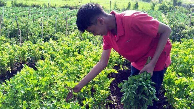 Petani Batu Pilih Cara Konvensional Dari Pada Sistem Organik