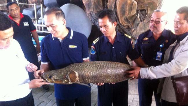 Kementerian Kelautan dan Perikanan Tinjau Ikan Arapaima di Jombang