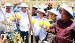 Desa Sendangharjo akan Jadi Kawasan Melon