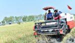 Petani Lamongan Mulai Minati Asuransi Pertanian