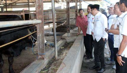 Demi Kenyamanan Warga dan Pengembangan, RPH Kota Malang Relokasi ke Arjowinangun