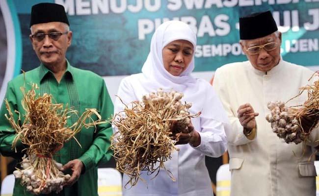 PRODUK POTENSIAL: Gubernur Jatim Khofifah Indar Parawansa didampingi Bupati Bondowoso KH. Salwa Arifin (kiri) saat panen perdana bawang putih di Sempol Bondowoso